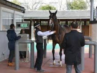 馬体重測定